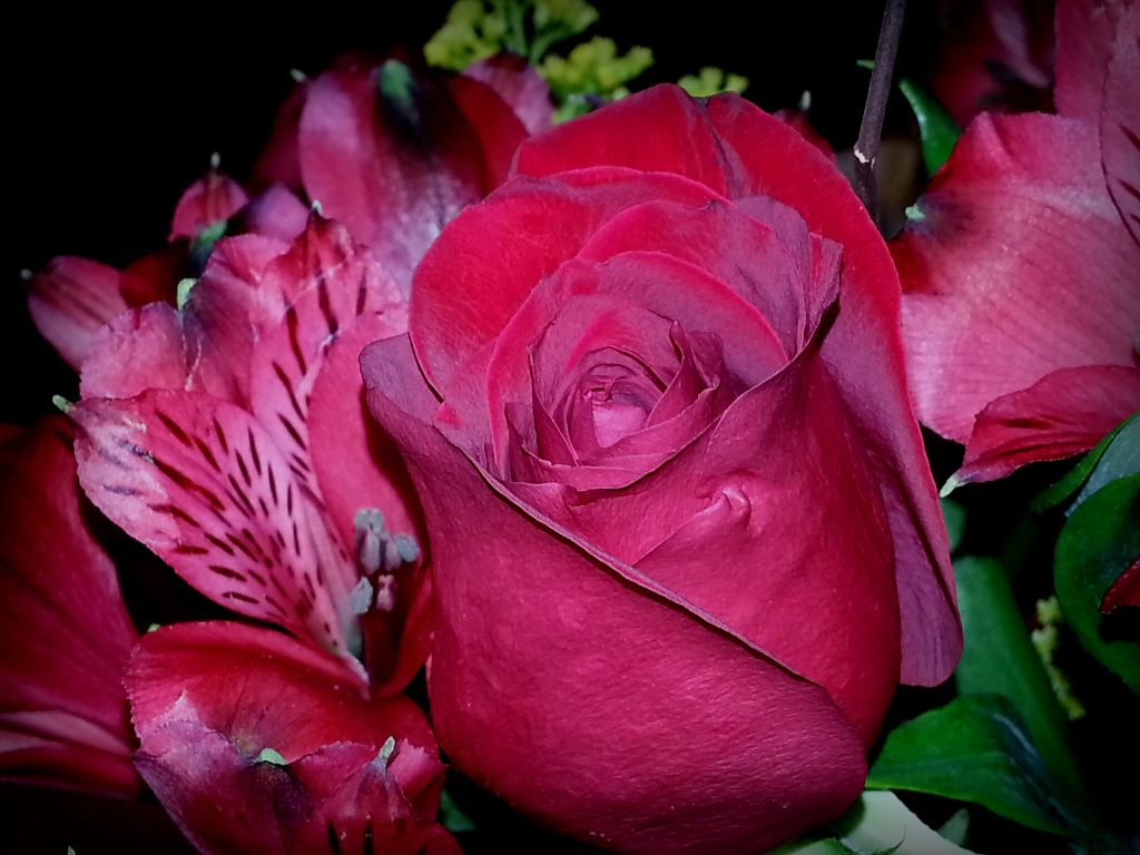 Good night folks.more roses red rose.my favorite. no edit