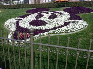 disney travel cute flower
