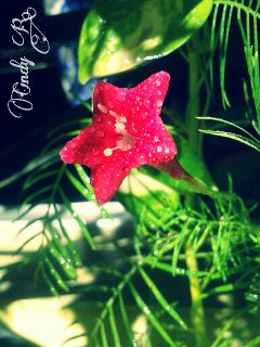 star flower nature cute colorful