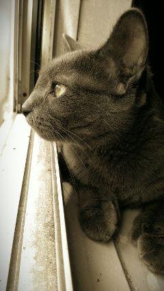 cat pets & animals nostalgia