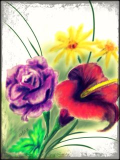 color splash dcflower pencil art nature flower