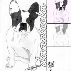 dog drawing stepbystep bull dog pencil art