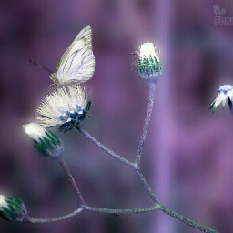 indonesia photography nature photostory flower butterfly funnzyfam