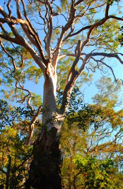 nature photography spring australia quite