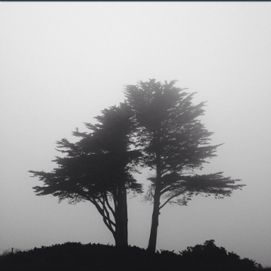 pictures of fog