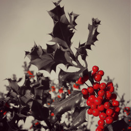 color splash christmas nature photography vintage