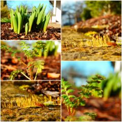 spring collage