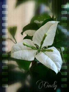 flower nature photography summer white