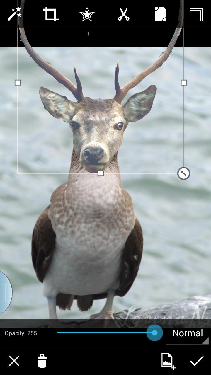 free crop photo editing to create animal hybrid