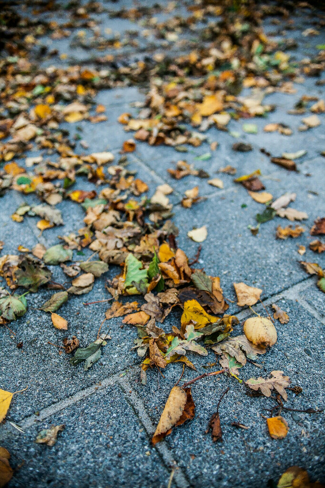 Autumn leafs on the concrete.