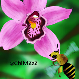 dcflower drawing nature flower