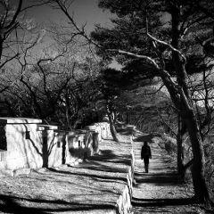 korea nature black & white people autumn