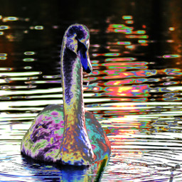 photography water pets & animals nature colorful