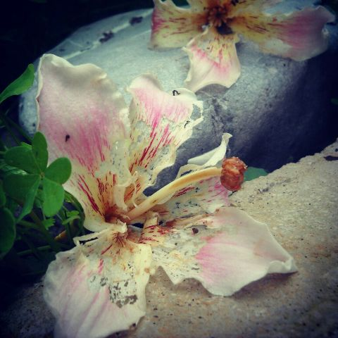 sicily photography nature emotions flower