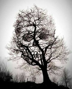 photography nature emotions black & white