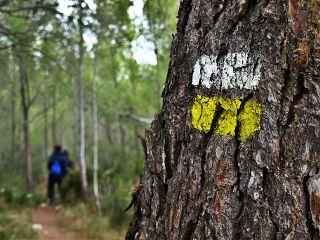 nature mediterranean wood friends noedit