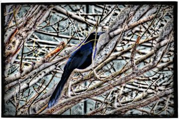 photography pets & animals nature winter