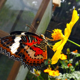 butterfly colorful macro nature photography bokeh funnzyfam indonesia