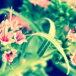 pink flowers nature