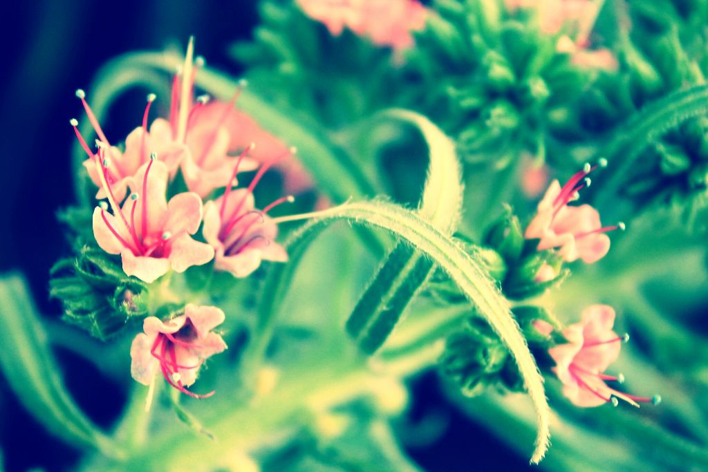 #pink  #flowers  #nature