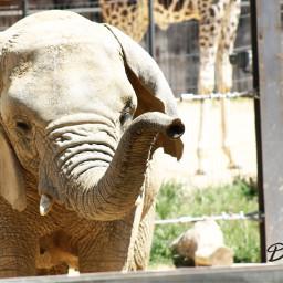 baby love pets & animals photography elephant