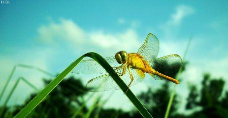 photography nature macro travel pets & animals summer
